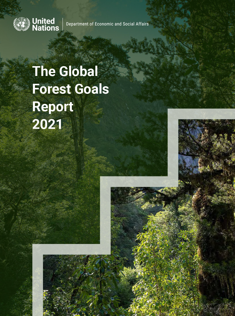 Publication cover featured with forest image